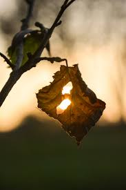 tree nature branch light sun photography sunlight morning leaf flower green golden reflection insect autumn erfly