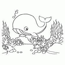 Walvissen Kleurplaten Leuk Voor Kids