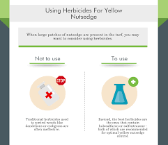 Nutsedge Herbicides Dealing With Yellow Nutsedge In Your Lawn Green Turf Care