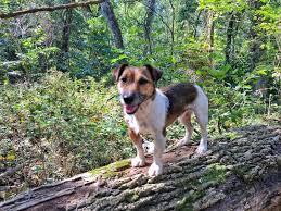 Walking Logs Terriermans Daily Dose Misto Likes Walking Logs