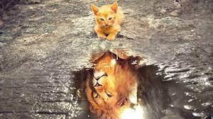 Wallpaper Nature, Animals, Cats ...
