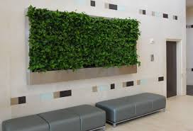 office indoor plants. Office Indoor Plants I