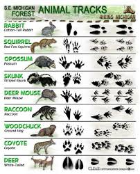 Animal Footprint Identification Animal Track