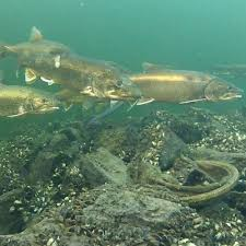 Image result for lake trout fishing pics