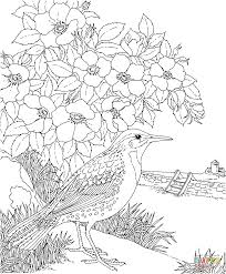 Small Picture Meadowlark and Prairie Rose Dakota State Bird and Flower coloring