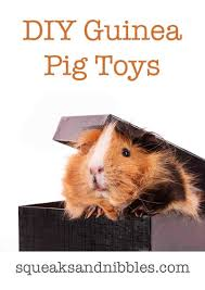 diy guinea pig toys guinea pig toys you can make at home