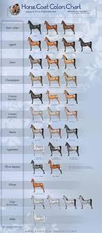 Colour Chart Horses Ponies Beautiful Beings Horse Coat
