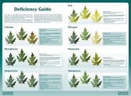 Plant Nutrient Deficiency Chart Do Your Plants Have A Nutrient Deficiency Atlantis Hydro