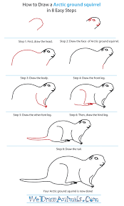 Small Picture How to Draw an Arctic Ground Squirrel