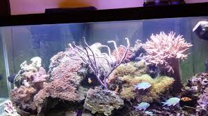 reef light fluval pro 2 0 led light do not