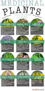 best medicinal plants ideas insect repellent medicinal plants you can grow at home