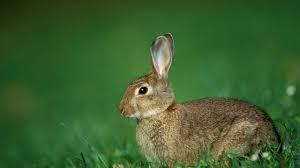 Картинки по запросу заяц