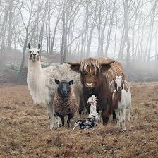Animal Photo Albums 20 Animal Bands That Look Like They Are About To Drop The