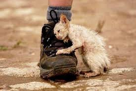 Image result for abandoned cat