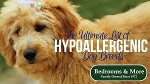 list of hypoallergenic dog breeds for