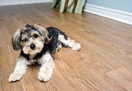 best flooring for dogs solved bob vila