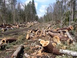 Illegal Logging Strange Behaviors