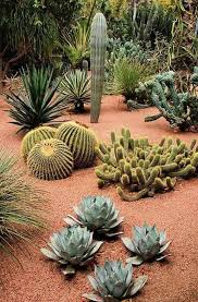 Small Picture 1240 best Endless Succulent Ideas images on Pinterest Succulents