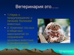 Презентация на тему Моя профессия Ветеринар Скачать бесплатно  3 Ветеринария это