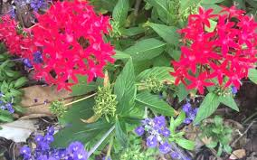 low maintenance plants for central florida central flowers for summertime best low maintenance plants for central