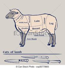 Cuts Of Lamb Chart Vector Lamb Cuts Diagram