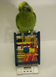 Parakeet Growth Chart Weaning Growth Chart For Parrot Life Stages Parrot Care