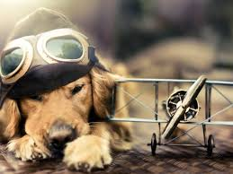 Dog Desktop Backgrounds on HipWallpaper ...