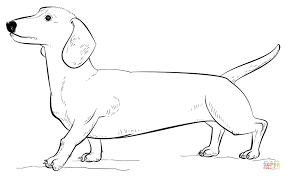 44 Dachshund Coloring Pages Dachshund Dog Coloring Page Free