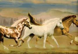 country running free horses western