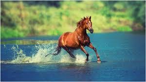 wild horses running wallpaper. Wild Horse Running Wallpaper Desktop Hd To Horses
