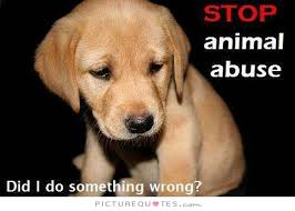 Stop animal abuse. Did I do something wrong quote | Picture Quotes ...