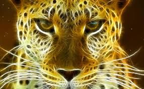 3D Moving Cats Wallpaper on WallpaperSafari