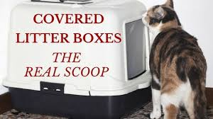 image covered cat litter. Covered Litter Boxes: The Real Scoop Image Covered Cat Litter G