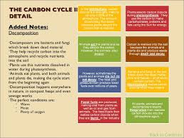 gcse biology revision  contents 30 the carbon cycle
