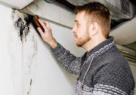 how to get rid of mold in the basement