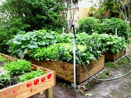how to grow a vegetable garden for beginners elegant fancy design ve able gardening in florida