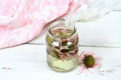 echinacea angustifolia tincture