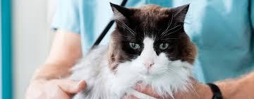 The Healthy Cat Checklist Backyard Cat Enclosures