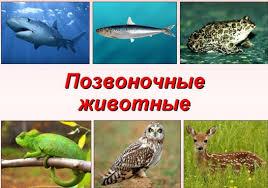 Контрольная работа по биологии в классе Позвоночные животные
