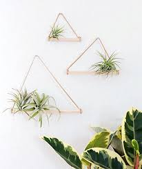 attach suede lace to a dowel and secure the air planter to it using a wire so simple to complete this diy air plant holder project here