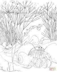 Small Picture Hermit Crab coloring page Free Printable Coloring Pages