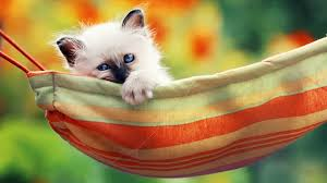 upscaled cats pets cute baby s wallpapers free 1920x1200