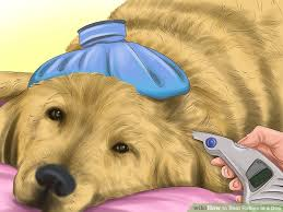how to spot rabies in a dog steps pictures wikihow image titled spot rabies in a dog step 1