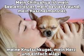 Hund Bester Freund Spruch Hundezitate 2019 03 15