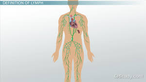 What Is A Lymph Definition Anatomy