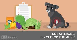 Top 10 Allergy Fixes For Dogs - Dogs Naturally Magazine