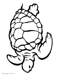 Innovative Animal Pictures To Colour Ocean Coloring Pages Printable