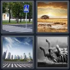 zebra 300x300 quality=65&strip=all&w=300