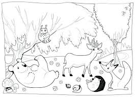 Coloring Pages Forest Animals Coloring Pages Of Forest Animals 52241 Bsacorporate