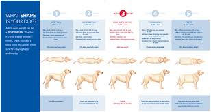 Dog Breed Exercise Chart How Do I Know If My Dog Is Getting Enough Exercise